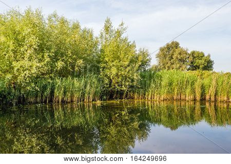 Windless day in a Dutch nature reserve. The trees shrubs and reeds are reflected in the mirror smooth water surface of the creek on a sunny day in summertime.