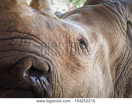 Eye of the rhino/ Selective focus on the eye