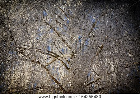 Frozen tree with rime as a background