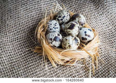 Quail eggs in nest. Heap of quail eggs in hay on sackcloth background