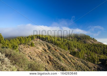 Central Gran Canaria In December