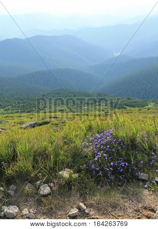 beautiful views of the Carpathian Mountains and bellflower