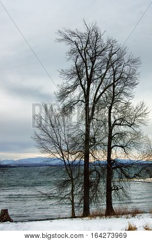 Lake Champlain in winter looking east. The foothills of the Green Mountains of Vermont can be seen over the eastern shore of the lake. Two large leafless trees are in the foreground
