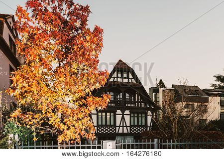 Beautiful timbered luxury house at dusk with red maple tree in front and calm neighborhood - Alsacian joie de vivre in Strasbourg