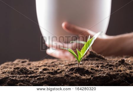 Sprouts In Ground