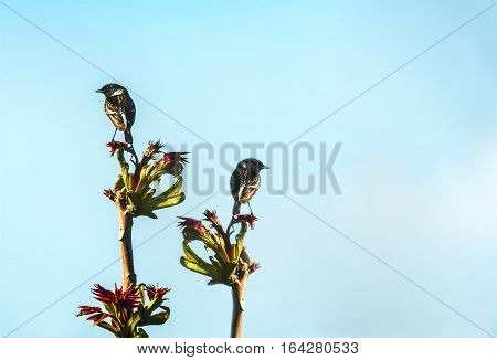 close up shot of the songbirds on wild flowers