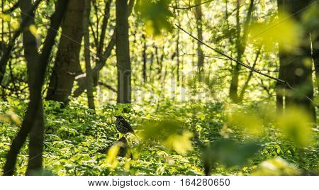 shallow focusing on the bird in sunny forest