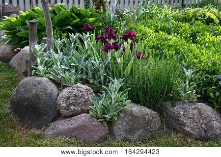 The flower bed with blossoming irises and vinca is limited by the big stones.