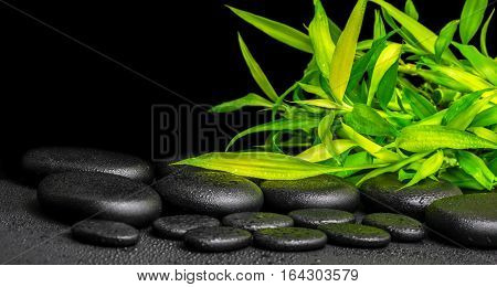 Spa Concept Of Twigs Bamboo With Dew On Zen Basalt Stones, Panorama