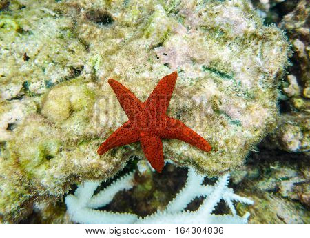 starfish of red color lies on a seabed