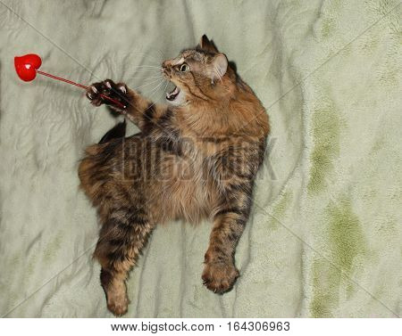 cheerful smiling from ear to ear tabby cat flaps wand with heart in Valentine's Day