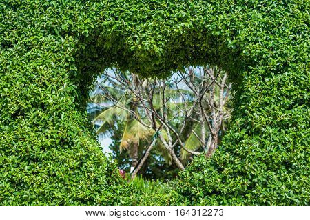 Bush With A Hole In The Form Of A Heart. Love Concept.