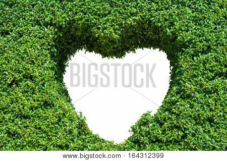 Bush With Isolated Hole In The Form Of A Heart. Love Concept.