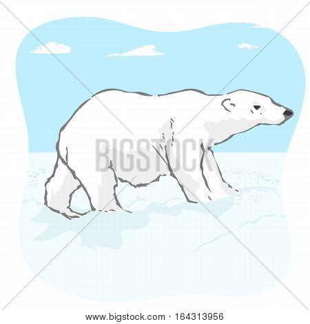 big polar bear in the arctic tundra