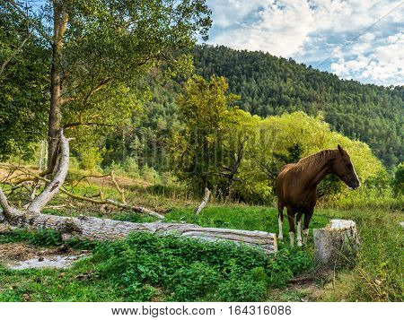domestic horse roams freely amist nature in a natural park a couple of hours away from Barcelona Spain.
