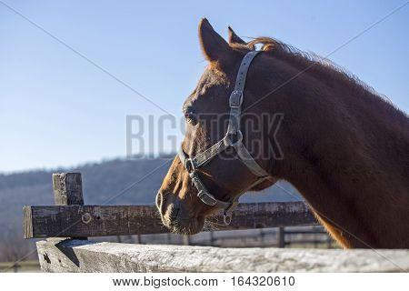 Peaceful purebred horse looking over wooden corral fence. Check out my another equine photos please