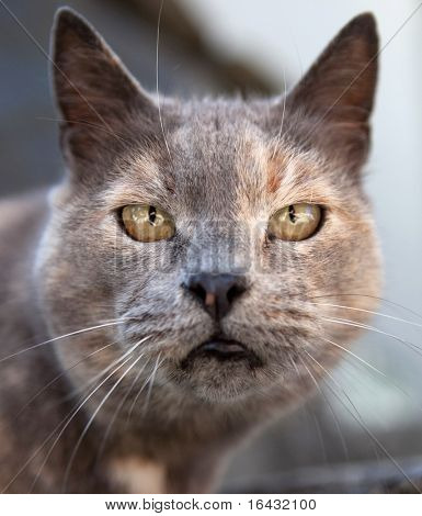Close-up portrait of a cat in a bad mood