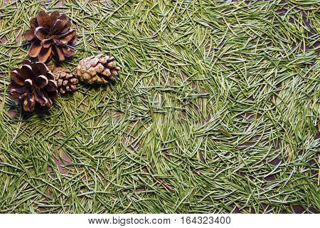 Forest background with green Christmas tree (fir) needles and cones