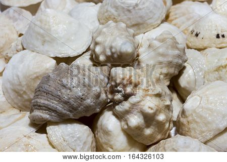 White cones shell and snail shell  background, circular strip drawing