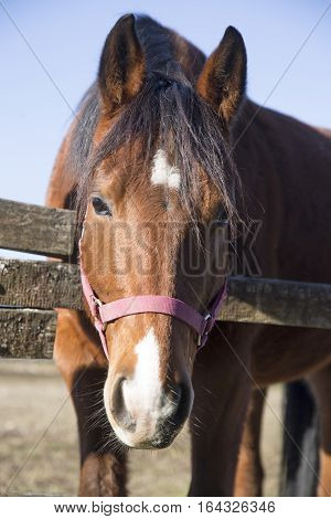 Curious purebred warmblood stallion looking over fence on a cold winter day. Check out my another equine photos please