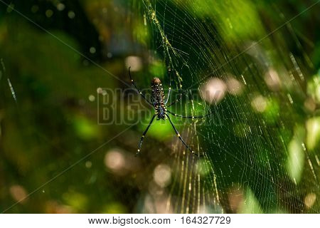 Spider on a spider web on the green nature background