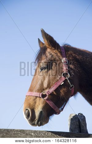 Purebred warmblood mare looking over fence on a cold winter day. Check out my another equine photos please