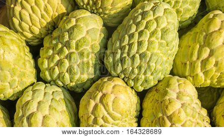 Many custard apples green fruits sugar apples sweetsop