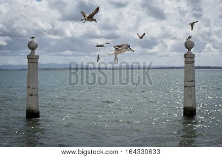 Seagulls flying in the Cais das Colunas in the Tagus River Lisbon Portugal