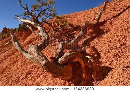 A branch tumbles toward a path a Bryce Canyon, Utah