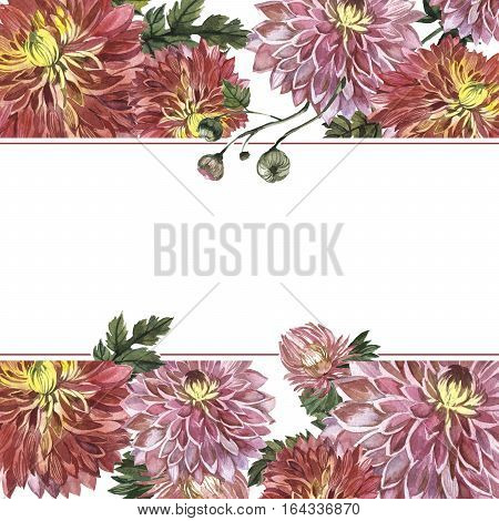 Wildflower aster flower frame in a watercolor style isolated. Full name of the plant: Aster Duchess Mixed.