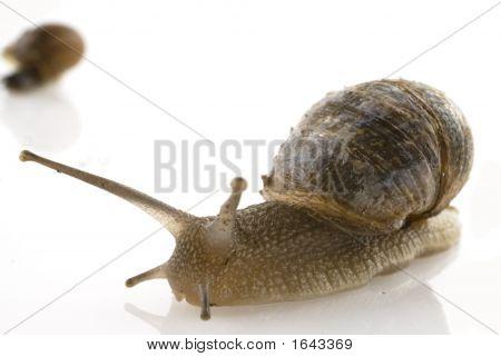 Slow Snail