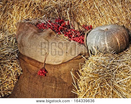 Thanksgiving Display.Pumpkin on hay stacks and burlap sack with red berries.Retro style toned image.