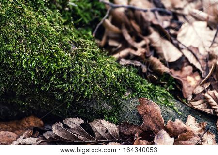 Moss at the base of the tree, still green, despite the cold