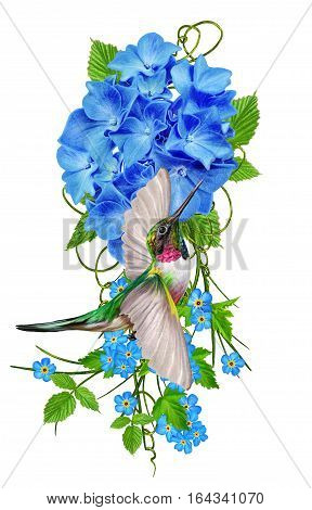 Flower composition. Isolated on white background. Small hummingbird. The inflorescence is bright blue hydrangeas green leaves delicate flowers.