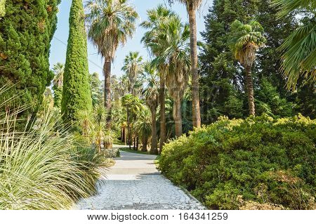 Palm trees, cypress and juniper along the walkway in the Park