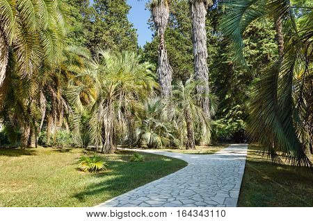 A paved walking path in a subtropical Park among palm trees