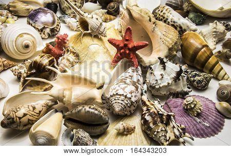 Beautiful Background Of Colorful Sea Shells