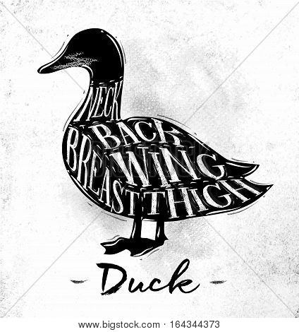 Poster duck cutting scheme lettering neck back wing breast thigh in vintage style drawing on dirty paper background