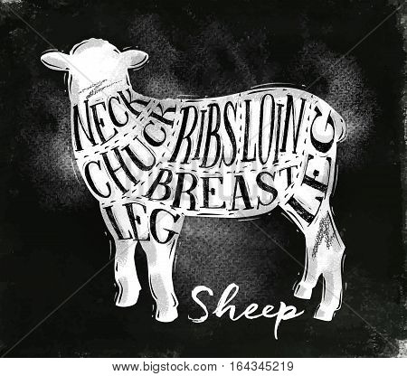 Poster sheep lamb cutting scheme lettering neck chuck ribs breast loin leg in vintage style drawing with chalk on chalkboard background