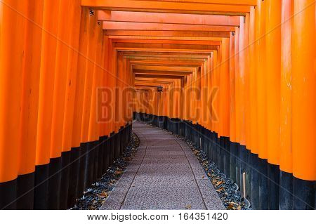 Tori gate at Fushimi-inari temple thousand red tori (Zen Gate to the Japanese Temple) Kyoto Japan