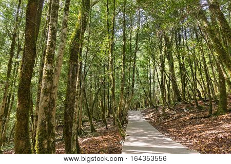 The road to the yew-boxwood grove on the Eastern slope of the mountain