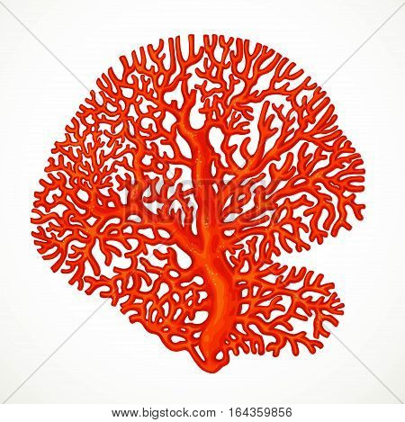 Big Red Corals Sea Life Object 1 Isolated On White Background