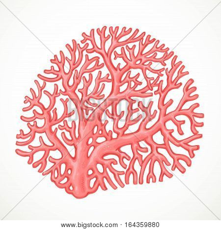 Pink Corals Sea Life Object Isolated On White Background