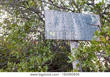 very old wooden sign in a forest, greece