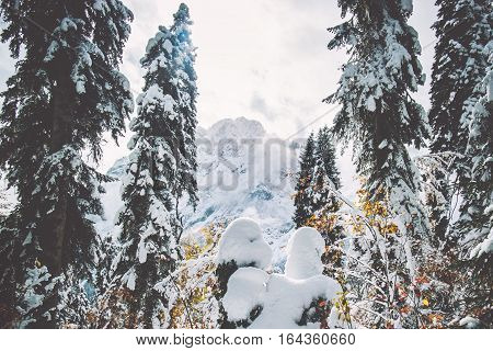 Winter snowy Coniferous Forest and Mountains Landscape Travel serene scenic view cold weather