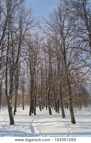 Snow on trees against a winter sun sky