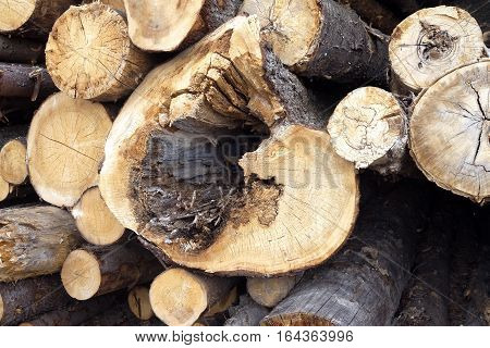 Rotten trunks. Bad condition construction materials. Sawed pine logs stacked in a pile closeup