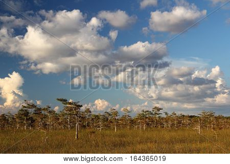 Scenic Landscape in Everglades National Park, South Florida