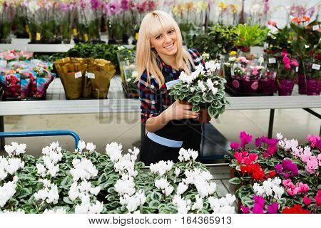 seller flower shop attractive woman holding potted flower