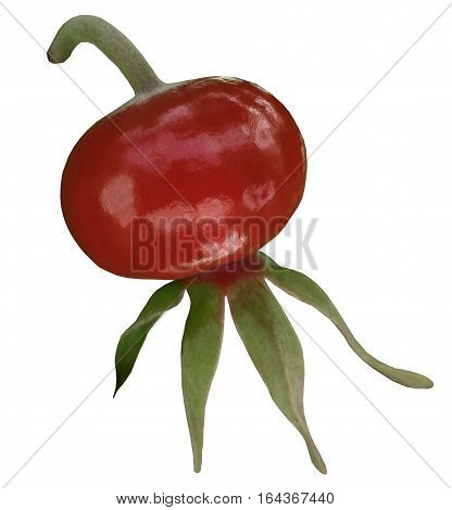 dog-rose fruit. red rose. isolated on white background. close-up. Rosehip berries. Nature.